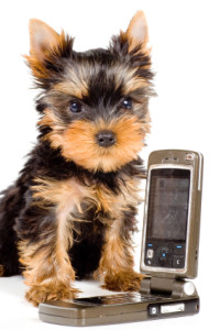 cell-phone-and-puppy